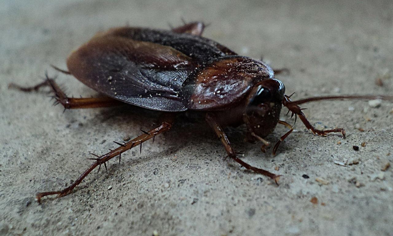 Pest control services in Faversham