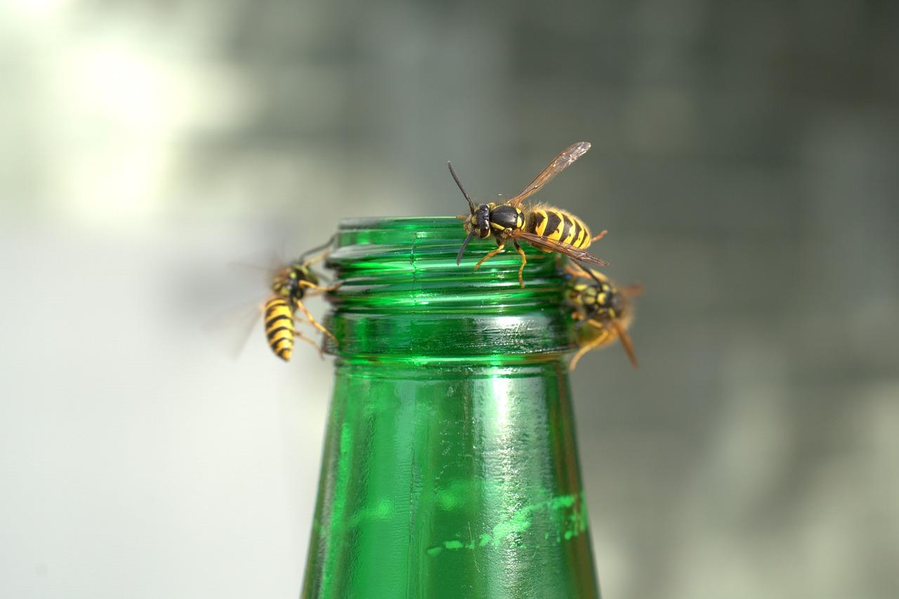 wasps on a beer bottle - we offer 100% wasp nest eradication